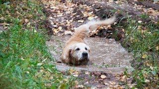 Поисковые собаки ищут «потеряшек»