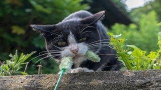 Смешно до слез про кошек Смешные приколы 2018 #43 (Улетно и бойко)