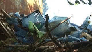 Жители дома по улице Политехническая жалуются на беспорядок во дворе