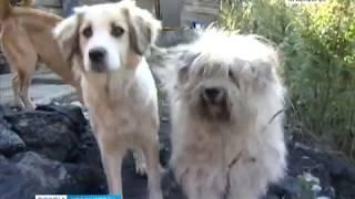 Краевые депутаты обсудили, как справиться с засильем безнадзорных животных на красноярских улицах