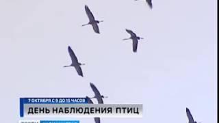 На Куршской косе отметят День наблюдения птиц