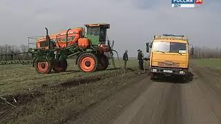 Донские аграрии: сверхурожая ждать не стоит, но качество зерна будет выше