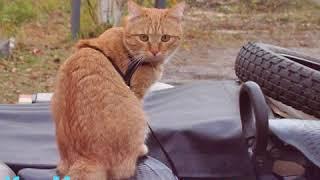 Кот-путешественник по имени Мякиш