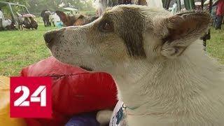 """""""Всем по собаке"""": благодаря выставке пристроено более двух тысяч питомцев - Россия 24"""