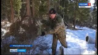 На Алтае начинают уникальный проект по восстановлению популяции сибирской кабарги