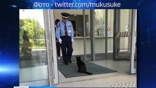 В Зеленоградск решили пригласить японских котов-интеллектуалов
