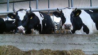 Предприятиям племенного животноводства будет оказана помощь на заготовку кормов