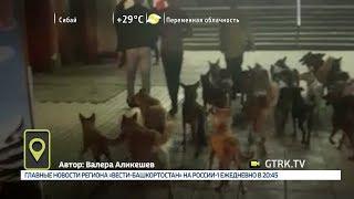 Мобильный репортер - 03.08.18