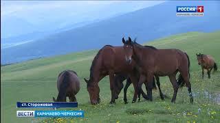 Как живется фермеру в Карачаево-Черкесии?