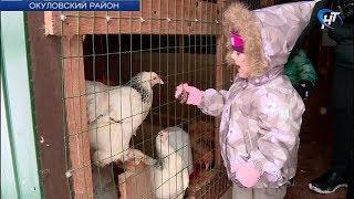 В Окуловском районе на базе частной конной фермы обсудили перспективы развития сельского туризма
