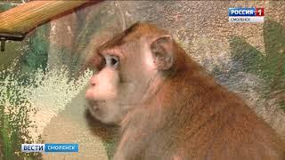 Три питомца Смоленского зоопарка претендуют на звание самого красивого