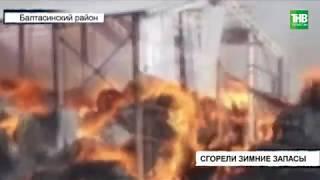 Несколько тысяч рулонов сена сгорели в Балтасинском районе | ТНВ