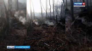 В Башкирии уже три недели горят торфяники