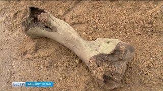На берегу Белой в Уфе найдены останки мамонта