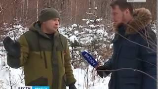 Спрос на живые ёлки к Новому году в Иркутской области падает