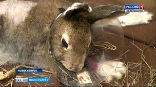 Новосибирцы откликнулись на призыв помочь больному зайчику
