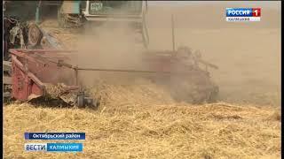 Завершается уборка риса
