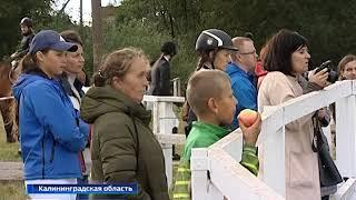 В Калининградской области прошёл турнир по конкуру