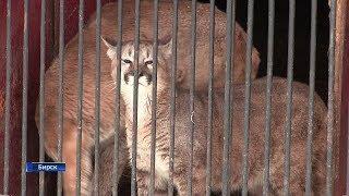 Редких животных конфисковали у передвижного зоопарка в Башкирии