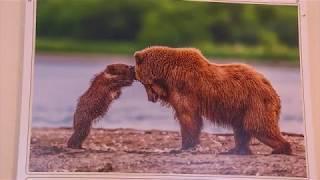 """Омичи могут посмотреть на """"Материнство в дикой природе"""""""