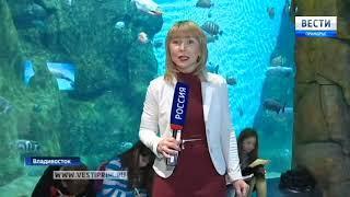 Владивостокские школьники увидели «Планктон как на ладони»