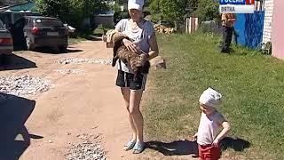 Вакцинации домашних собак и кошек от бешенства в заречной части Кирова(ГТРК Вятка)