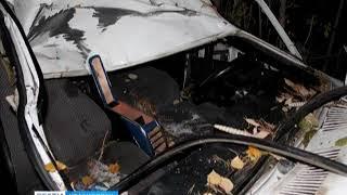 При столкновении с лосем на трассе погиб водитель