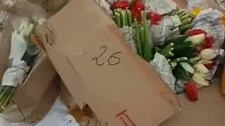 Цветы на снегу: коммерсанты выбросили в лесу коробки с тюльпанами (видео)