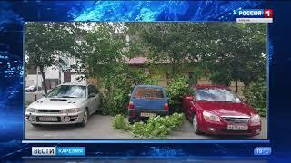 Около 20 деревьев не выдержали испытание ветром в Петрозаводске