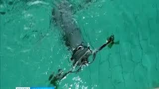 Красноярские учёные разработали первый в мире подводный квадрокоптер