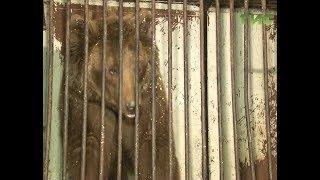 Ветеринары самарского зоопарка проверили здоровье найденных медведей