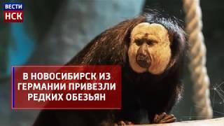 В Новосибирском зоопарке поселились белолицые саки
