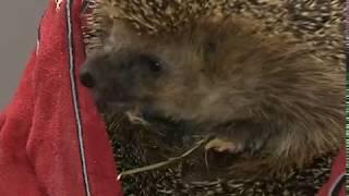 В Ярославском зоопарке животных готовят к зимней спячке