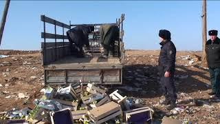 """700 килограмм """"санкционных"""" груш в Астраханской области уничтожено на свалке"""