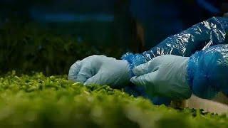 Смертельно опасный шпинат из Венгрии