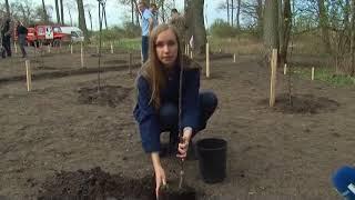 На Куршской косе высадили яблоневый сад в память о трагедии в Кемерове