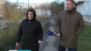 В Красноярске территорию школы оккупировали бездомные собаки