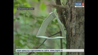 В Чувашии борются с насекомыми-вредителями