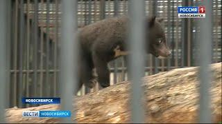 В нескольких семьях Новосибирского зоопарка родились детеныши