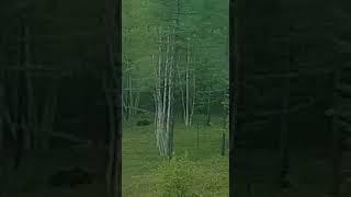 Медведи вышли на трассу Хабаровск-Совгавань