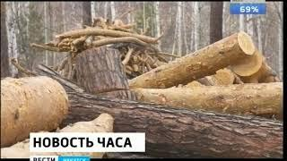 Леса на 75 миллионов рублей вывезли контрабандой из Иркутской области в Узбекистан