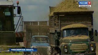 Новосибирским аграриям выделят деньги на топливо для уборочных работ