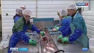 Рыбоперерабатывающие заводы в Карелии обеспечат сырьем