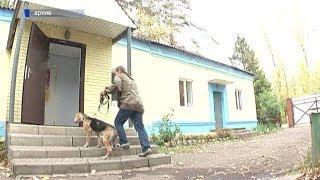 В Бирске у домашней собаки обнаружили бешенство: объявлен карантин