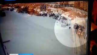 В Солнечном неизвестный застрелил собаку