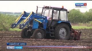 На полях Пензенской области завершают посадку овощей