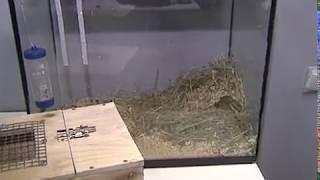 В Ярославском зоопарке в добрые руки пристраивают песчанок и хомячков