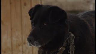 Активная собака Грета ищет дом