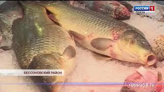 В Бессоновском районе активно развивается рыбоводство