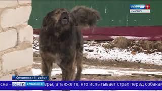 Терроризировавшую жителей смоленской деревни собаку обезвредили